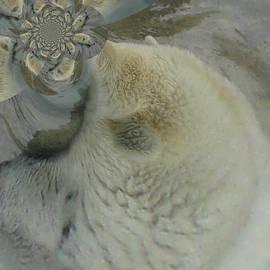 Kim Peto - Save the Polar Bear