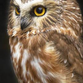 Sharon Ely - Saw-Whet Owl