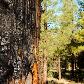 Ed  Cheremet - Scars of Forest Fire