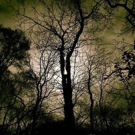 Tim Good - Scary Tree