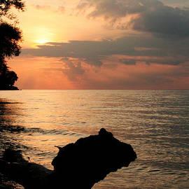 Heather Allen - Scenic Beach Driftwood Sunset
