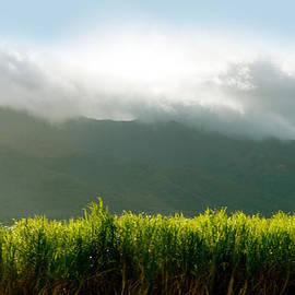 Sheela Ajith - Scenic Beauty