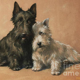 Celestial Images - Scottish Terrier