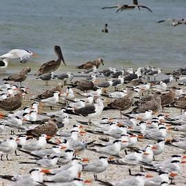 Chuck  Hicks - sea birds at Matanzas