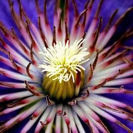 Karen Wiles - Sea Flower