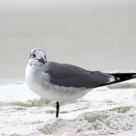 Gayle Miller - Sea gull