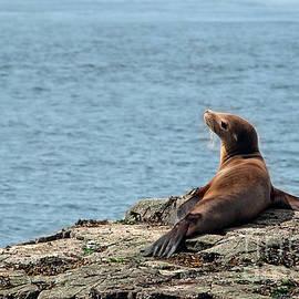 Melody Watson - Sea Lion in the Sun