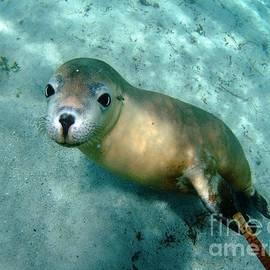 Crystal Beckmann - Sea lion on the seafloor