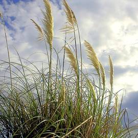 Debra Forand - Sea Oats 2