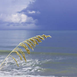 Karen Stephenson - Sea Oats Ahead of the Storm
