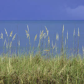 Karen Stephenson - Sea Oats by the Blue Ocean and Sky
