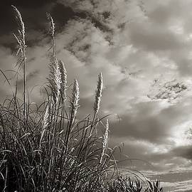 Debra Forand - Sea Oats
