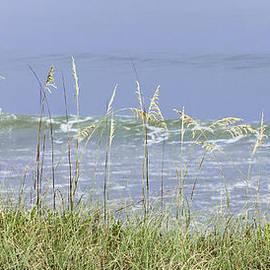Karen Stephenson - Sea Oats Panorama 1
