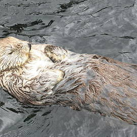 Brian Chase - Sea Otter
