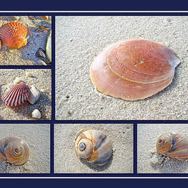 Mother Nature - Sea Shells