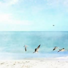 Barbara Chichester - Sea Shore Skimmers