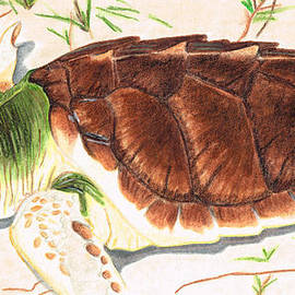 Sharon Cummings - Sea Turtle Art By Sharon Cummings