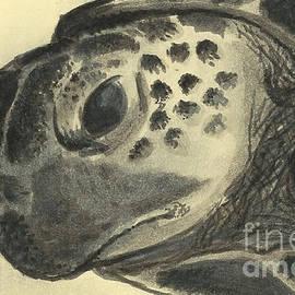 Johannes Vick - Sea turtle up close