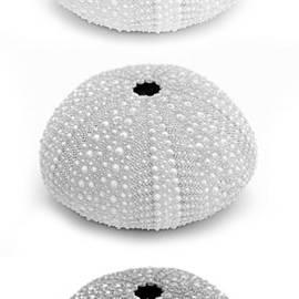 Jennie Marie Schell - Sea Urchins Black and White Vertical