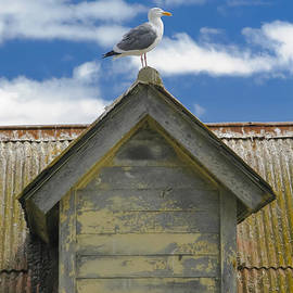 Wes Jimerson - Seagull Atop A Gable