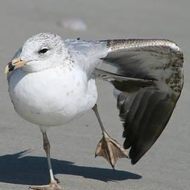 Beth Andersen - Seagull Ballet