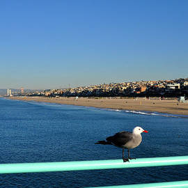 Diane Lent - Seagull on the Manhattan Beach Pier