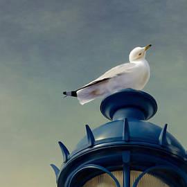Linda Muir - Seagull on top of Street Lamp