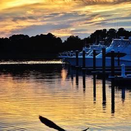 Kim Bemis - Seagull Sunset at the Indian River Marina Delaware