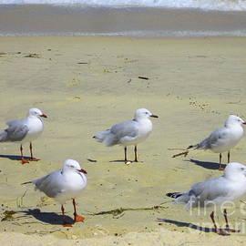 Juan Jiang - Seagulls at Perth beach