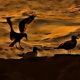 Dale Stillman - Seagulls by 3