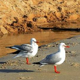 Chandana Arts - Seagulls