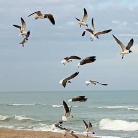 Cynthia Guinn - Seagulls On The Beach
