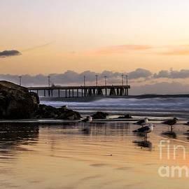 Mike Ste Marie - Seagulls on the Coast