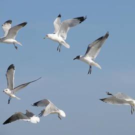 Ellen Meakin - Seagulls See A Cracker