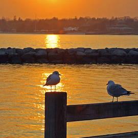 Karen Silvestri - Seaguls at Sunset