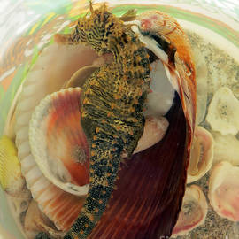 Patricia Januszkiewicz - Seahorse and Shells