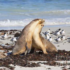 Mike Dawson - Seal Beach Battle