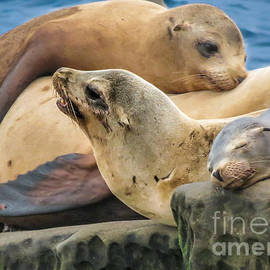 Darleen Stry - Seal Colony