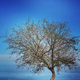 Yossi Aharon - #seaofgalilee #lake #sea #tree #nature