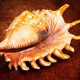 Alexander Senin - Seashell