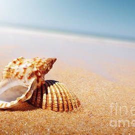Carlos Caetano - Seashell and Conch