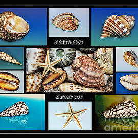 Kaye Menner - Seashell Collection 2