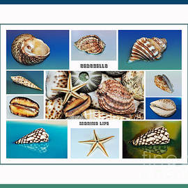 Kaye Menner - Seashell Collection 4 - Collage