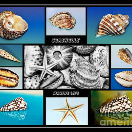 Kaye Menner - Seashell Collection