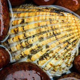 Marco Oliveira - Seashell On The Rocks