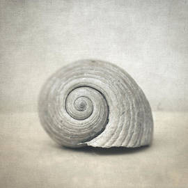 Taylan Soyturk - Seashell