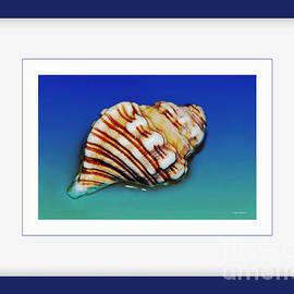 Kaye Menner - Seashell Wall Art 1 - Blue Frame