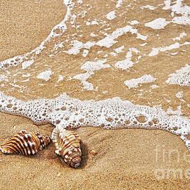 Kaye Menner - Seashells and Lace