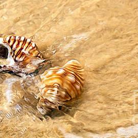 Kaye Menner - Seashells and Ripples