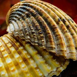 Marco Oliveira - Seashells